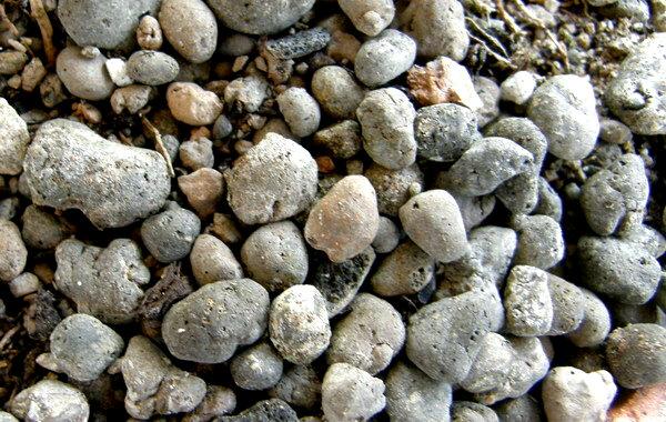 Potting soil for Bonsai