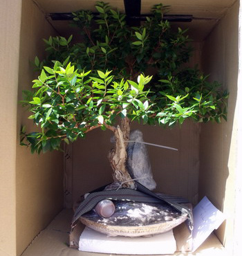 bonsai-shipping